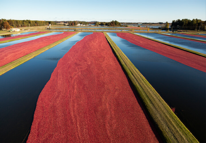 Wisconsin cranberry farm